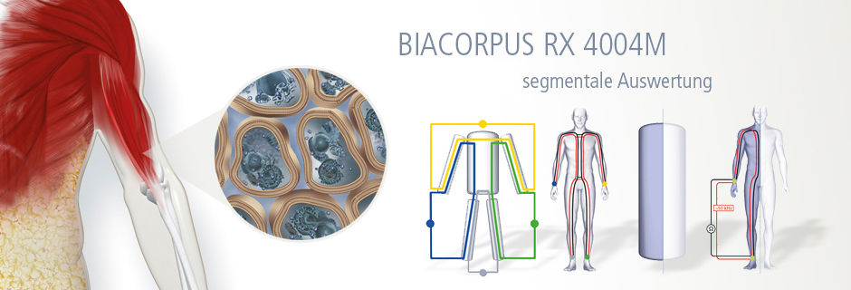 biacorpus segementale auswertung